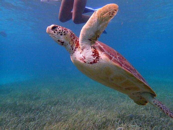 snorkeling-in-belize
