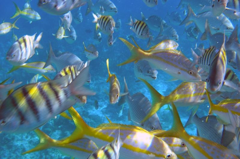 Belize Vacation Ideas