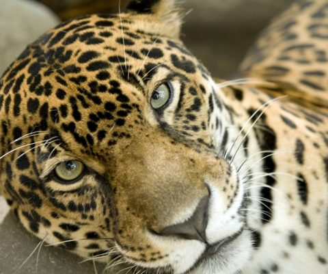 10 Reasons the Belize Zoo is a Must Do
