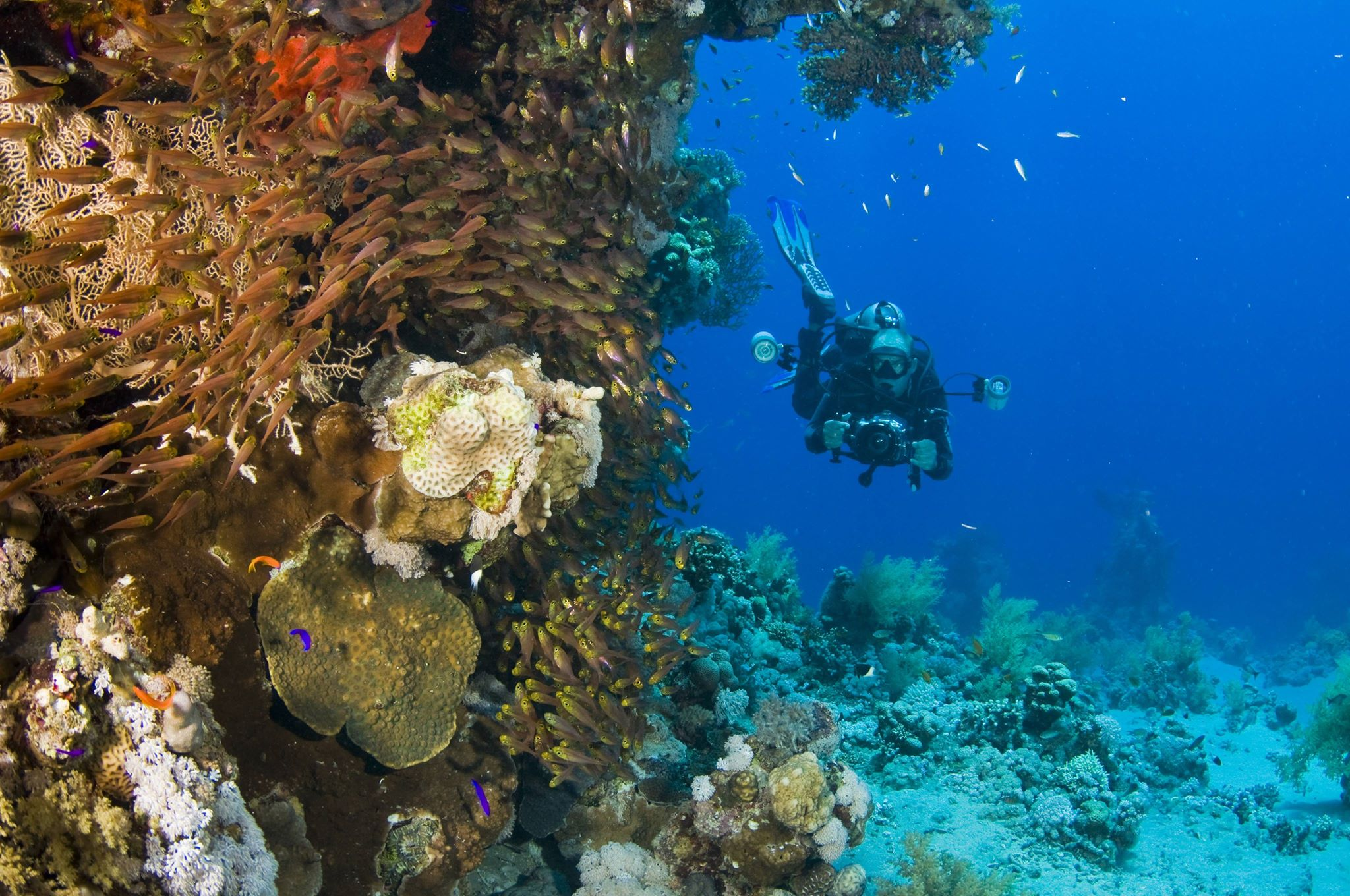 The Best Places to Dive in Belize