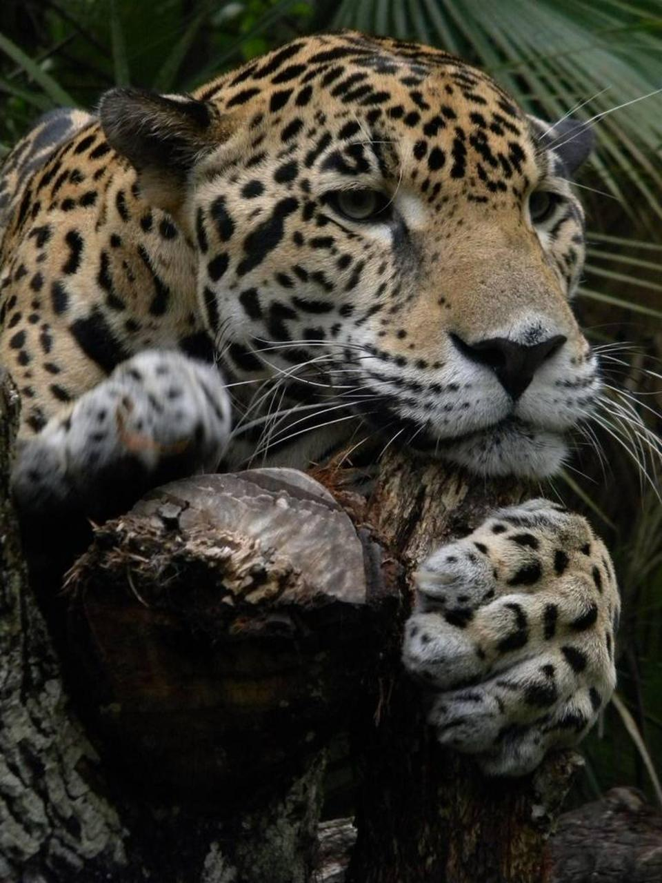Wildlife – 5