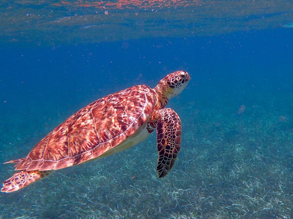 Belize An Eco-friendly Destination